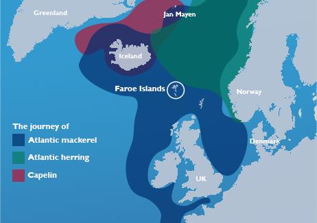 North Atlantic fish